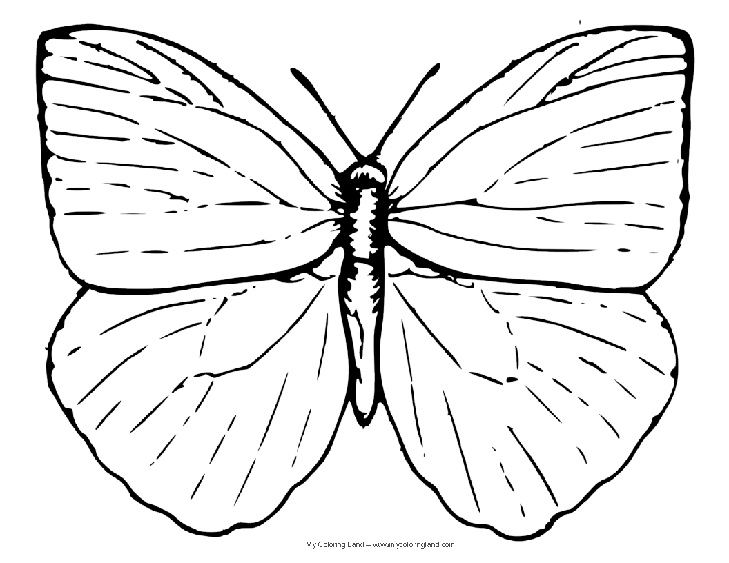 Butterfly cocoon coloring pages - Butterfly Coloring Pages