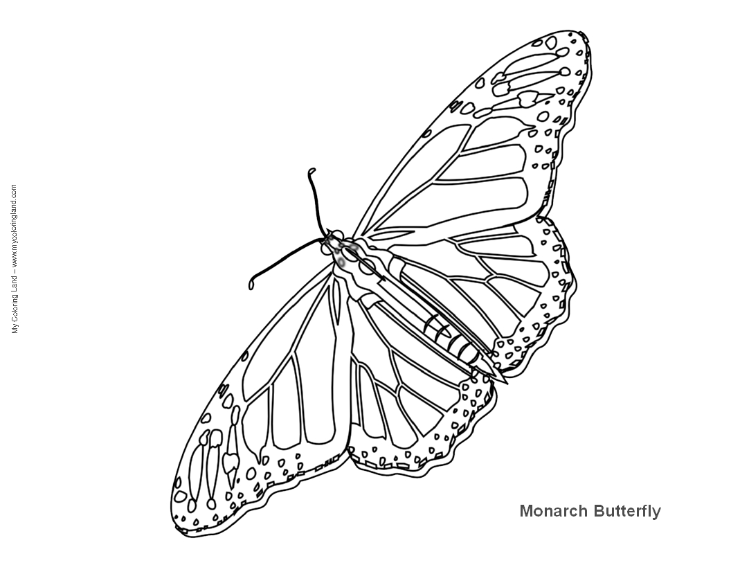 Free Caterpillar To Butterfly Coloring Pages