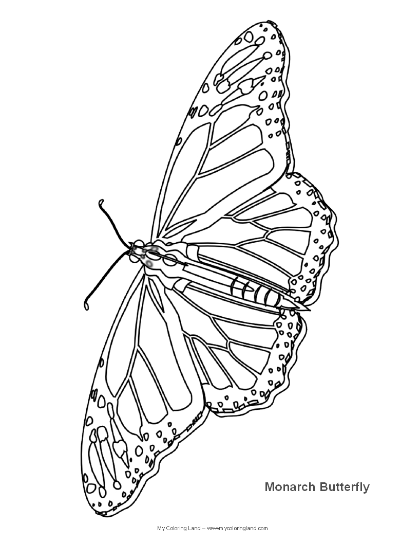 Pictures of monarch butterflies for coloring - Butterfly Coloring Pages