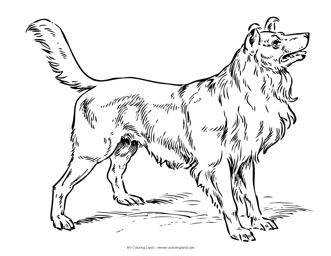 Dog my coloring land for Collie coloring pages