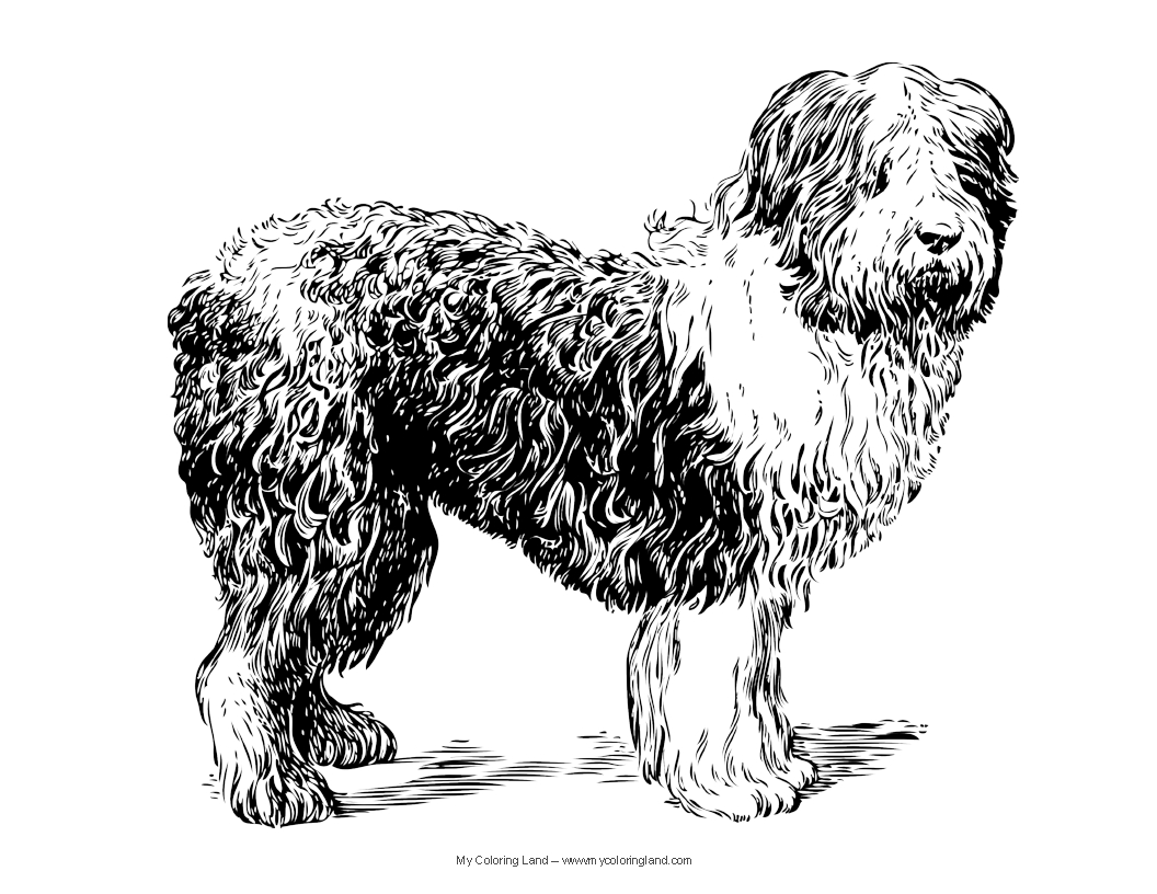 real dogs coloring pages - photo#21