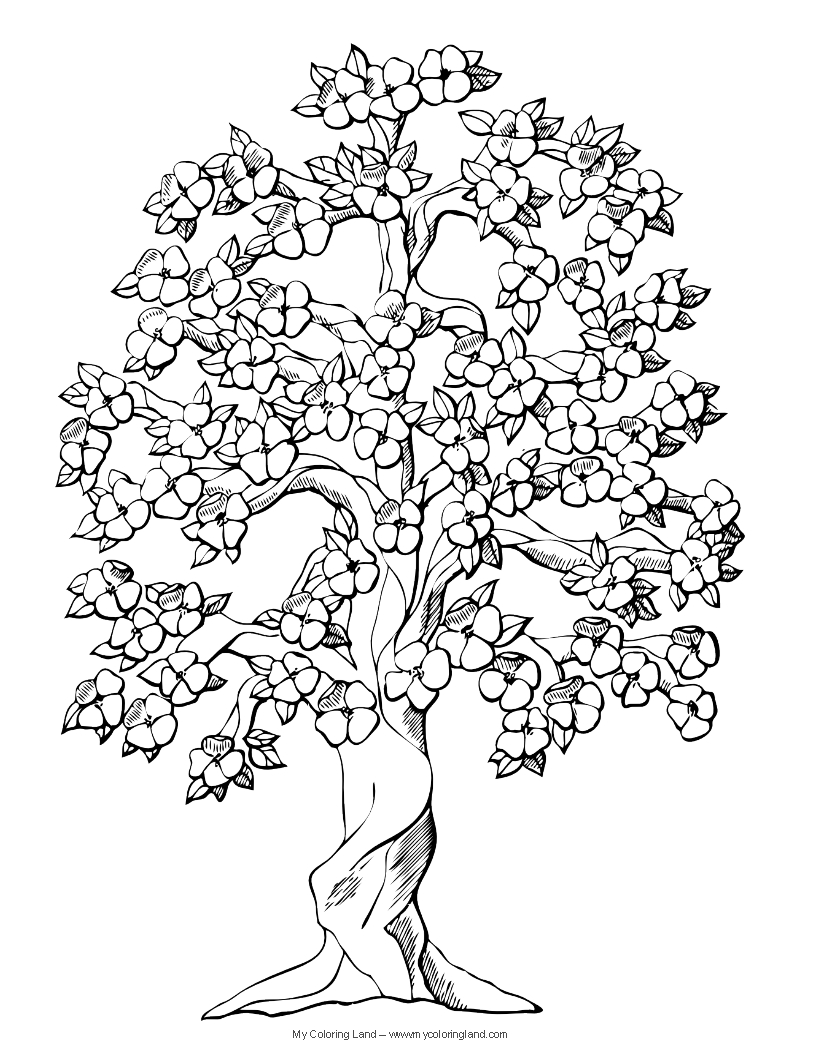 Coloring pages trees and flowers - There Will Be More Coloring Pages Of Flowers In The Future Because There Is Always Spring Here