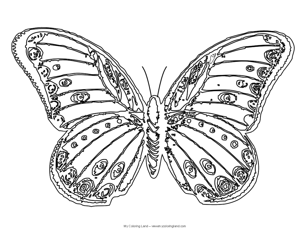 Butterfly - My Coloring Land